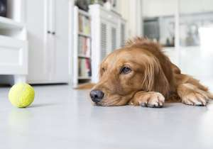 警惕狗狗的上呼吸道感染